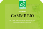 ORGANIC WINTER SAVORY OF PROVENCE - FR BIO 10 FROM PROVENCE FRANCE