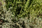 Real Herbes de Provence - dried, sorted and blended from Provence, France